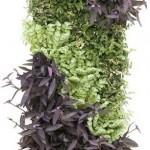 living wall or vertical garden