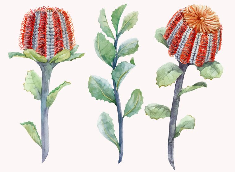 Banksia is recommended for any waterwise garden.